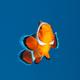 ปลาหายใจในน้ำอย่างไร