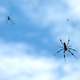 เมื่อแมงมุมล่วงหล่นมาจากท้องฟ้า ! (Ballooning spider)
