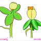 ดอกพุดตานเปลี่ยนสี:  การสร้างสรรค์จากธรรมชาติ