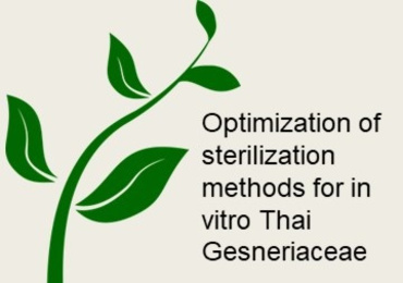 Optimization of sterilization methods for in vitro Thai Gesn ...