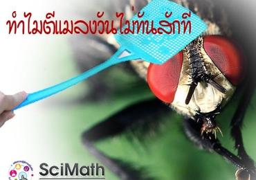 ทำไมตีแมลงวันไม่ทันสักที