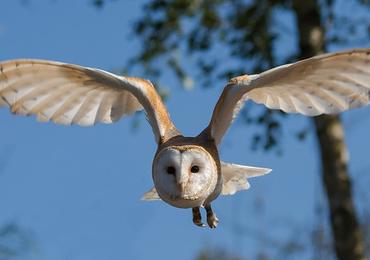อนาคตพลังงานลมจากปีกนก