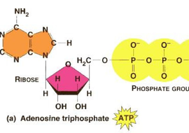 Double life of ATP