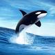 """ธรรมชาติของ """"วาฬ"""""""