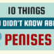 10 เรื่องมหัศจรรย์เกี่ยวกับน้องชาย (Penis)