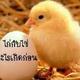 ไก่ กับ ไข่ ใครเกิดก่อนกัน!!!