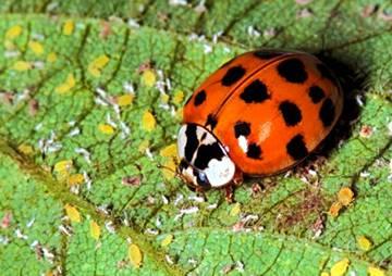 แมลงศัตรูพืช บนใบไม้