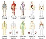 ระบบต่างๆของร่างกาย