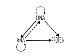 Central dogma รูปภาพ 1