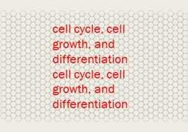 cell cycle, cell growth, and differentiation cell cycle, cel ... รูปภาพ 1