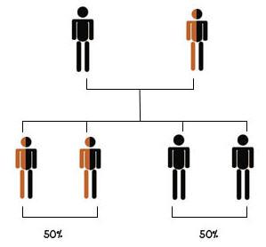 แผนภาพต้นไม้แสดงถ้าพ่อแม่คนใดคนหนึ่งเป็นโรคธาลัสซีเมีย และอีกคนมียีนแฝง โอกาสที่ลูกจะเป็นพาหะเท่ากับ 50% และโอกาสลูกที่จะเป็นธาลัสซีเมียเท่ากับ 50%
