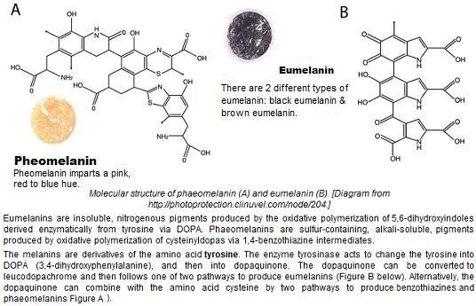 eumelanin & pheomelanin structure