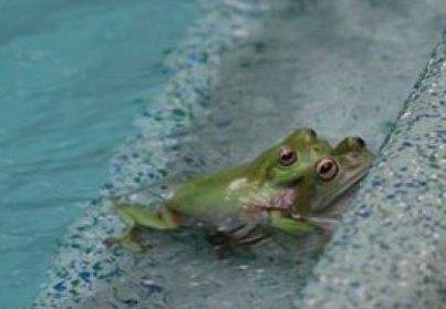 forecasting frog