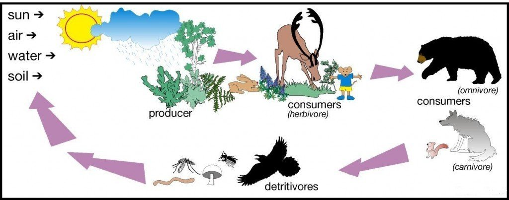the influence of various human activities on our ecosystem Terrestrial biodiversity is influenced by climate variability, such as extreme weather events (ie drought, flooding) that directly influence ecosystem health and the productivity and availability of ecosystem goods and services for human use.